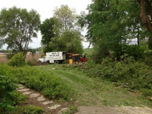 tree-service-milwaukee1
