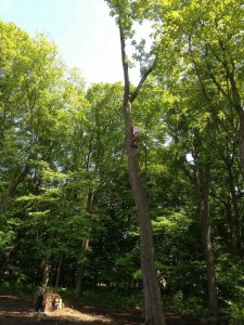 tree-service-milwaukee5